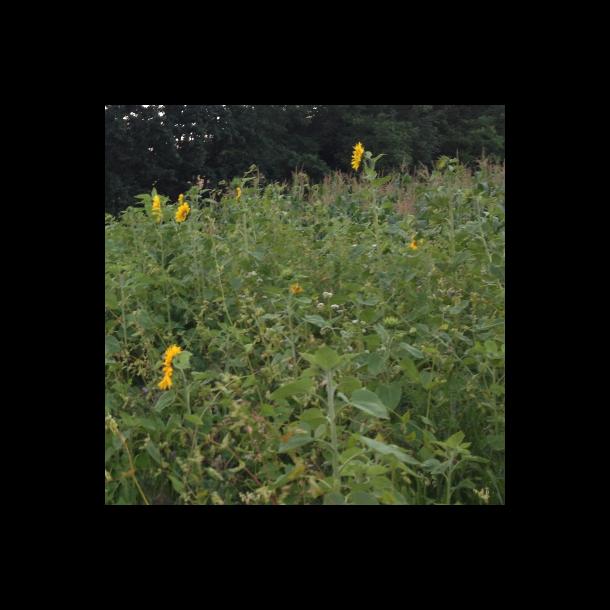 Blomsterparadis - 10 kg | DSV