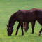 HorseMax FIBER ØKO - 10 kg | DLF