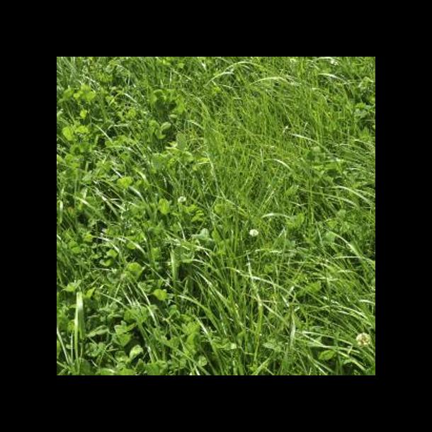 Kløvergræsblanding - Fugtig jord - 10 kg