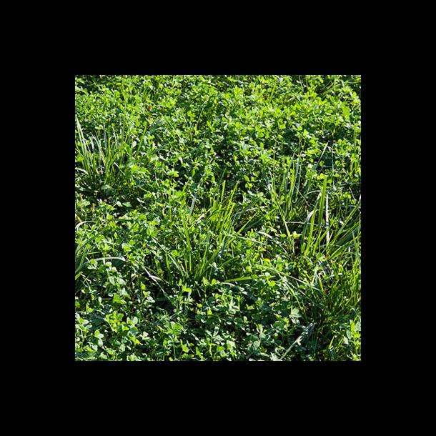 Lucerne/græs - 10 kg | DSV